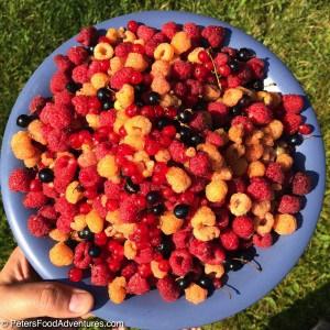 Fresh berries on a plate, raspberries and currants