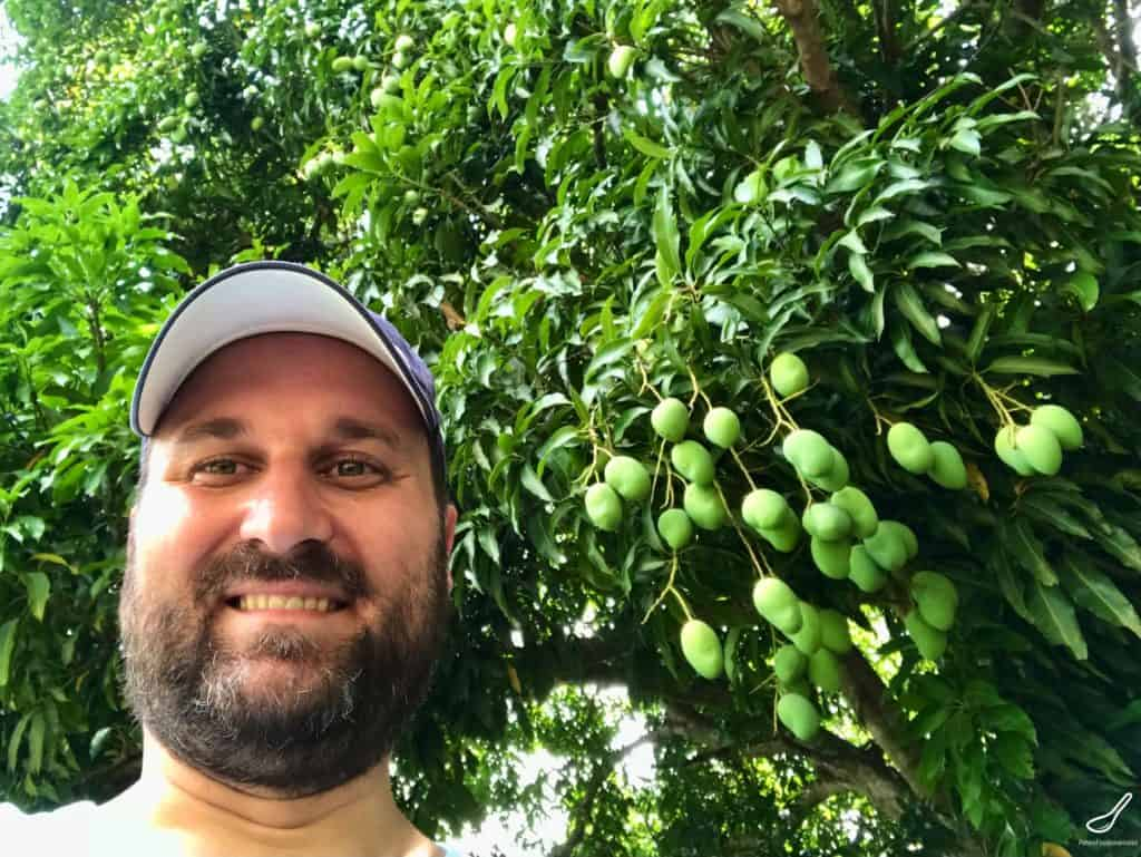 wild mangoes in Bolivia