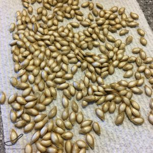 Sweet Chili Roasted Pumpkin Seeds drying towel