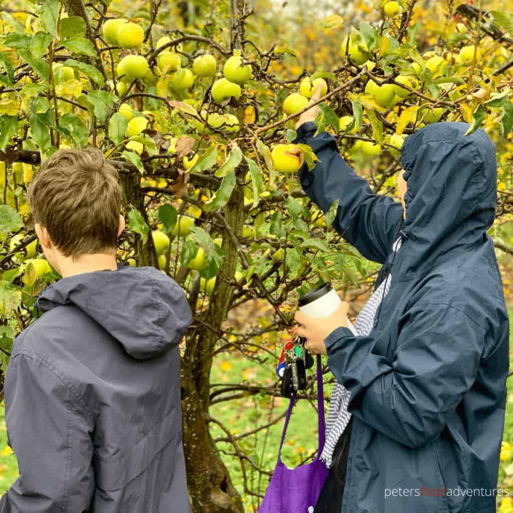 2 people apple picking