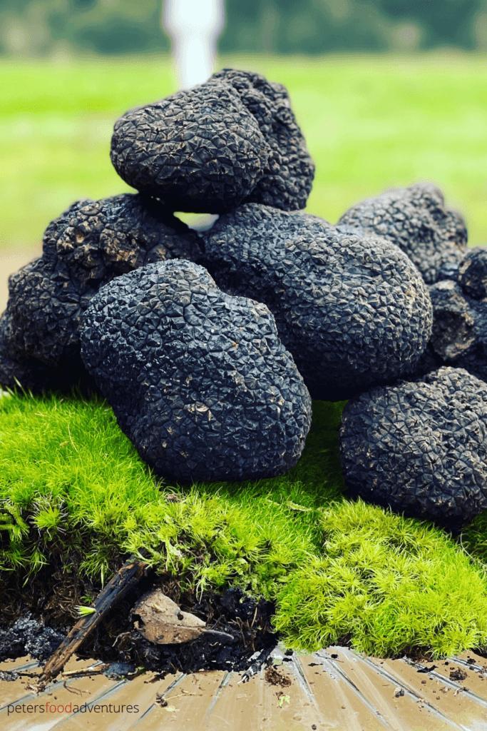 fresh truffles piled on top of green moss